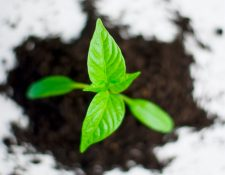 Tackling myths in entrepreneurship policy: what high growth firms really look like